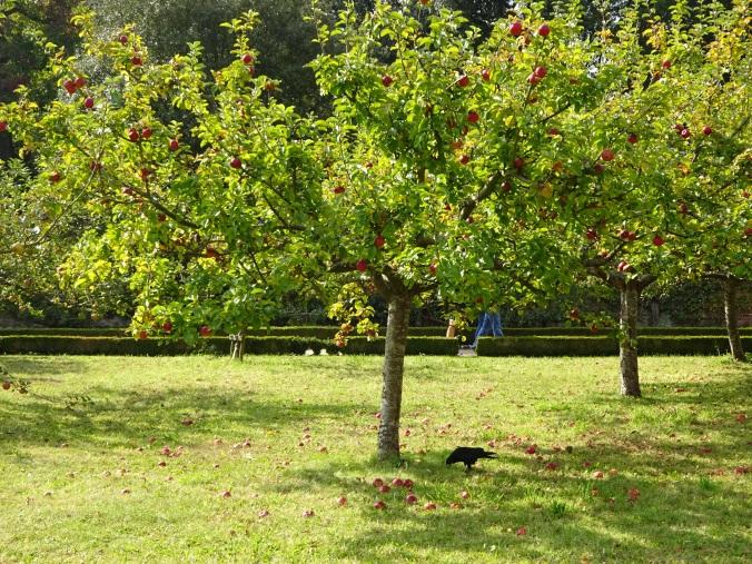 So many apple trees