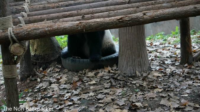 Spot the panda