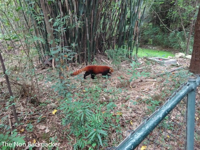 Even saw a red panda